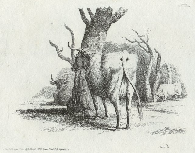 Etching of Cows, C. 1812