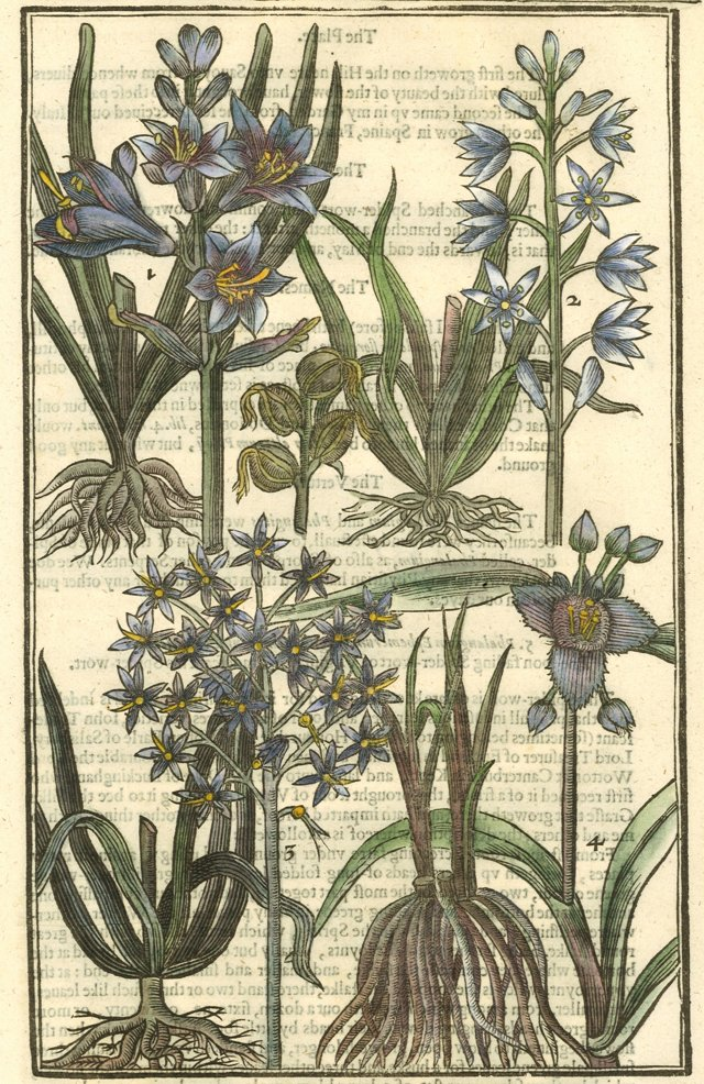 Hand-Colored Flowers 1629