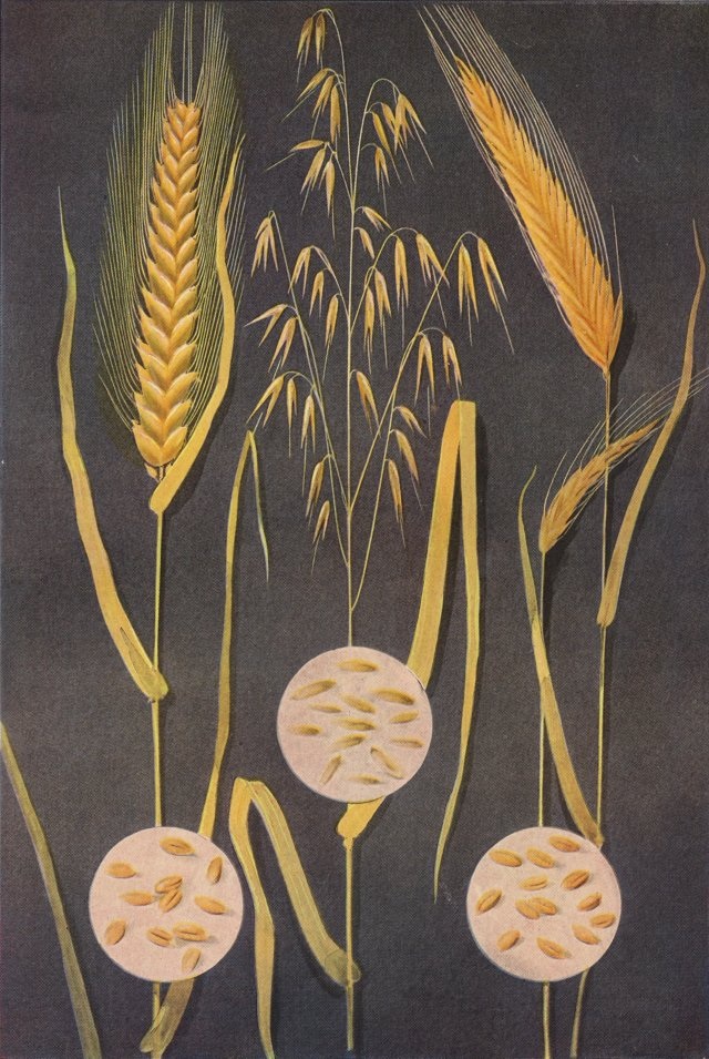 Lithograph of Grains, 1911