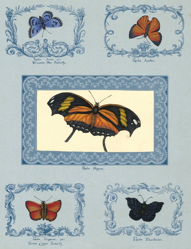 19th-C. Butterfly Watercolor Collage