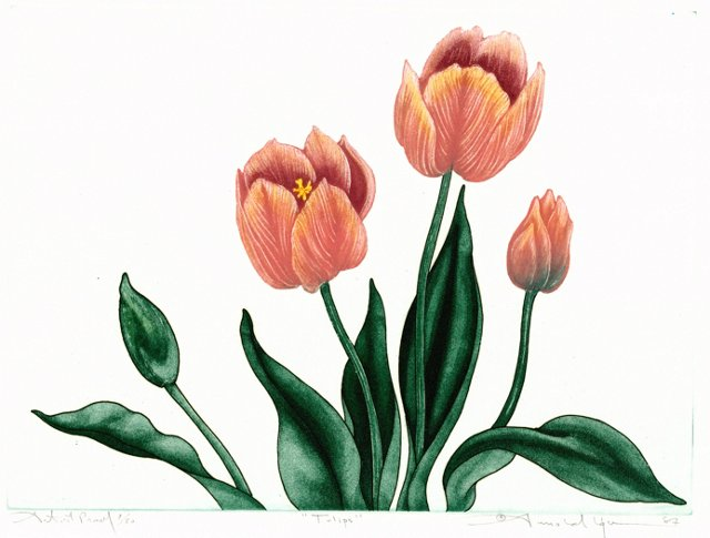 Pink Tulips Aquatint