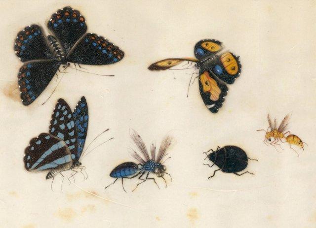 Butterflies & Insects Gouache, C. 1820