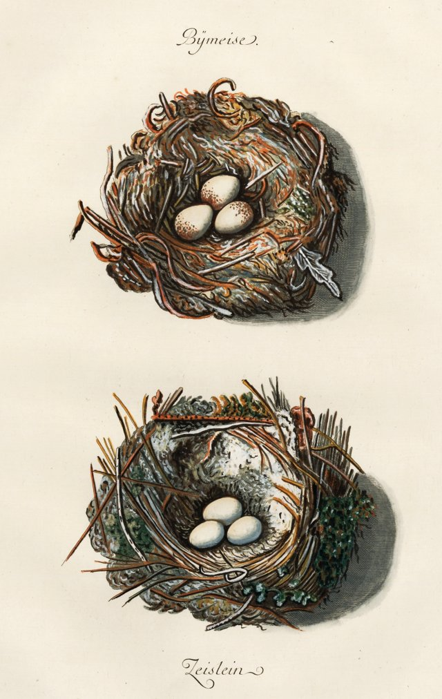 Hand-Colored Titmouse Nests, 1777