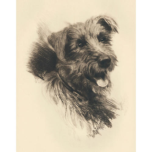 Terrier Etching by Frank Farkas