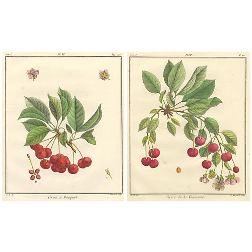 Hand-Colored French Cherries, Pair, 1768