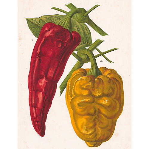 Red & Yellow Pepper Chromolithograph