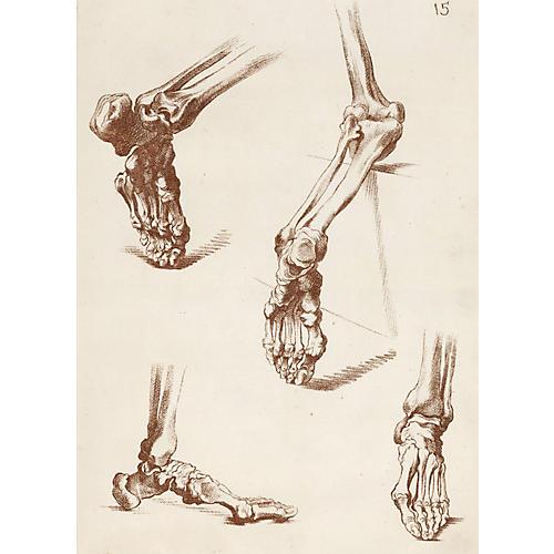 Bones of the Human Foot, 1765