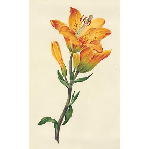 19th-C. Tiger Lily Watercolor
