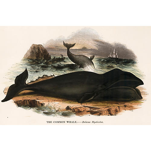 Hand-Colored Whale Engraving, 1843