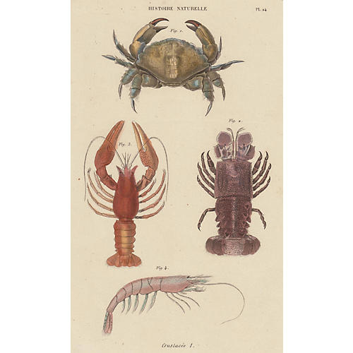 Hand-Colored Crab, Lobsters & Shrimp