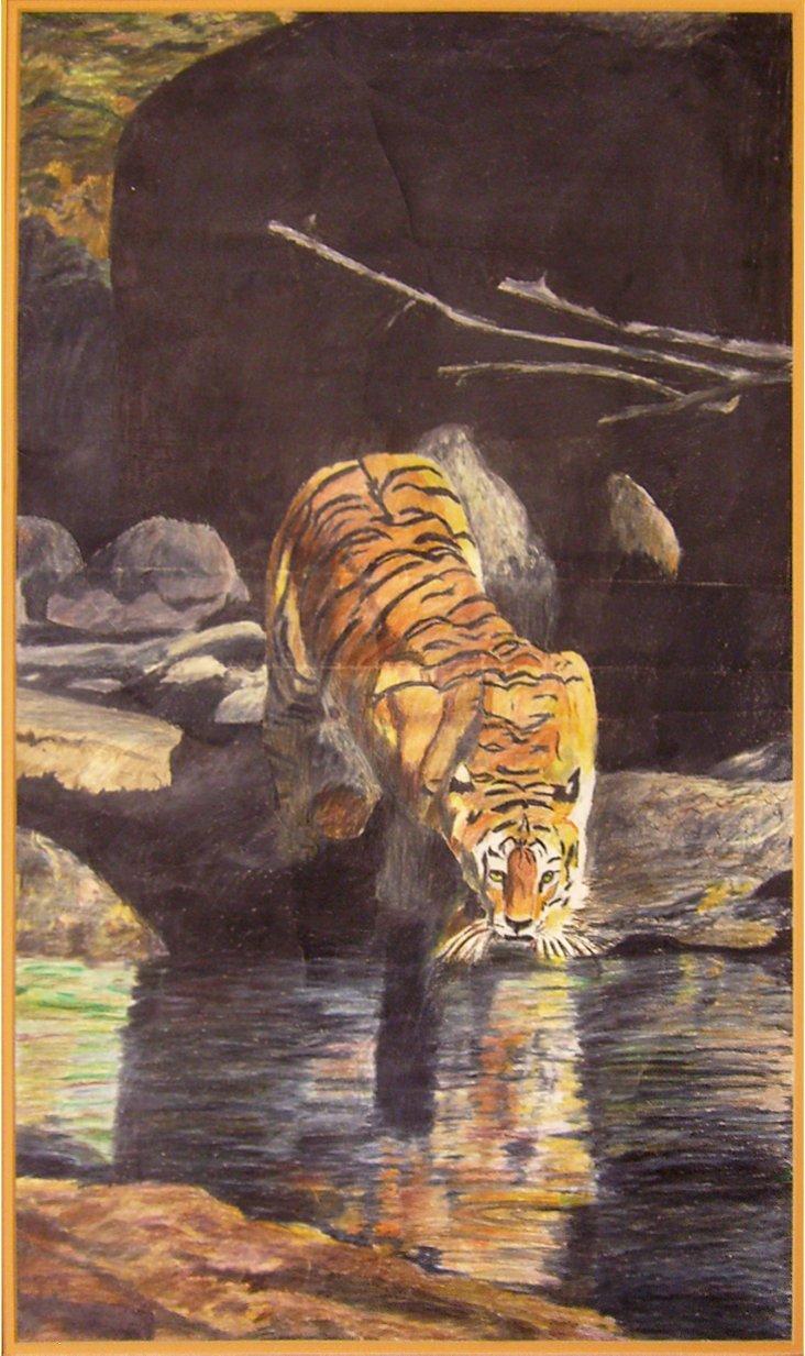 Tiger Drinking, C. 1970