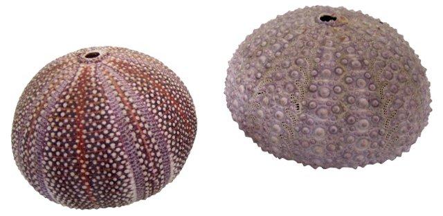 Sea Urchins, Pair