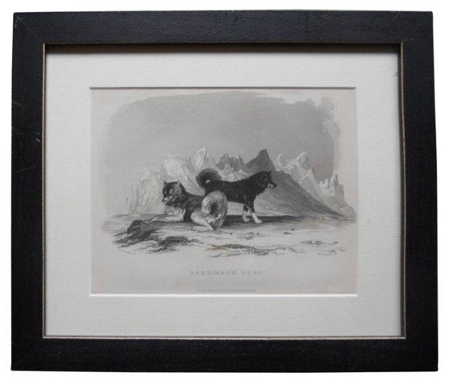 Siberian Huskies Steel Engraving, 1846