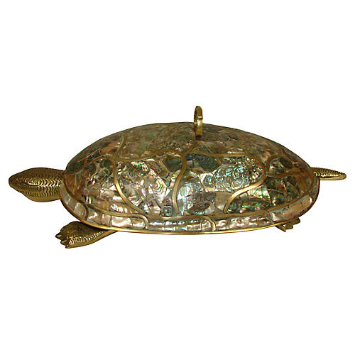 Mexican Abalone Turtle