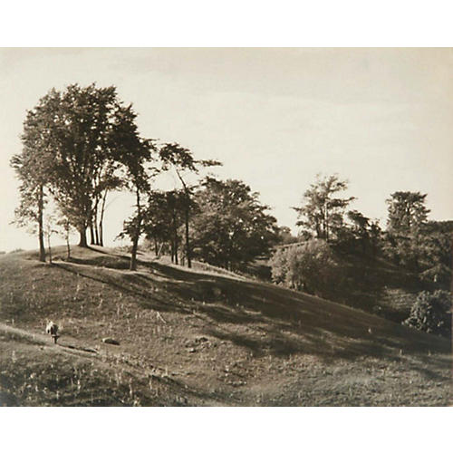 Photograph of Landscape w/ Trees