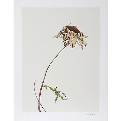 Dry Daisy by Paul Arthur Jansen