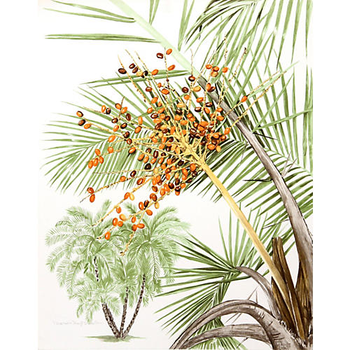 Phoenix Palm by Marion Sheehan