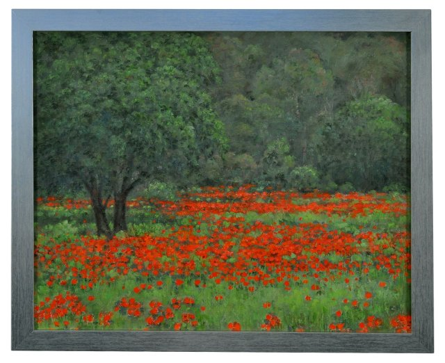 French Poppies en Provence