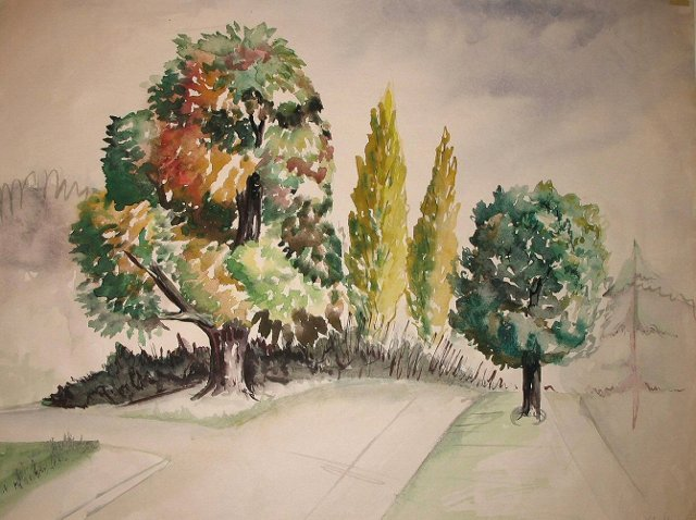 Trees by the Street