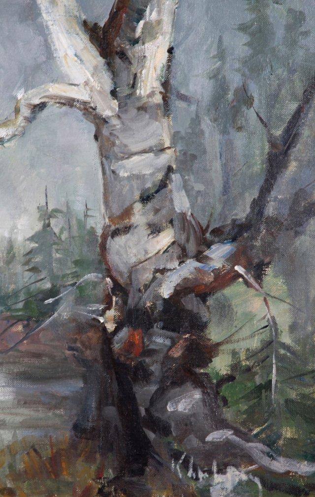 Birch Tree  Landscape