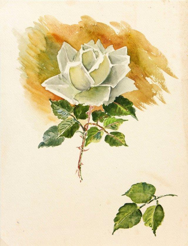 White Rose, C. 1950