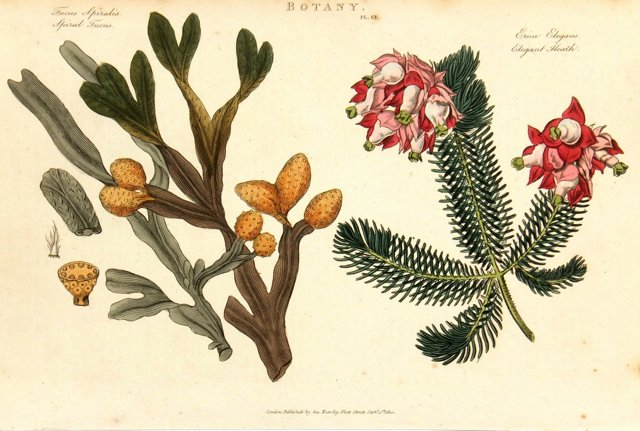 Elegant Heath, 1810