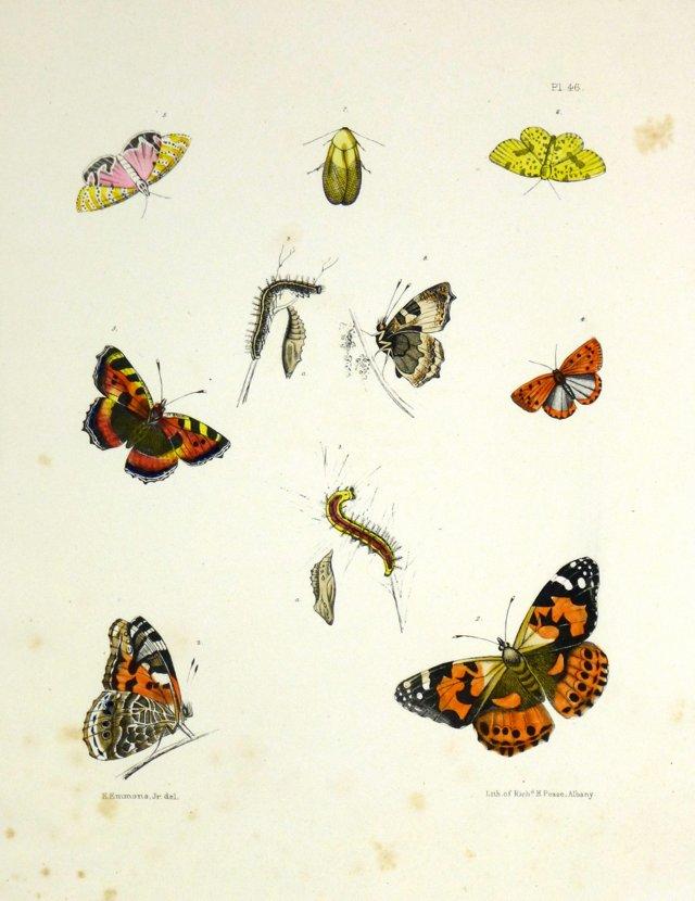 Butterflies, 1854