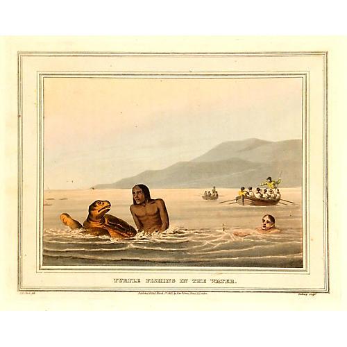 Sea Turtle, 1813