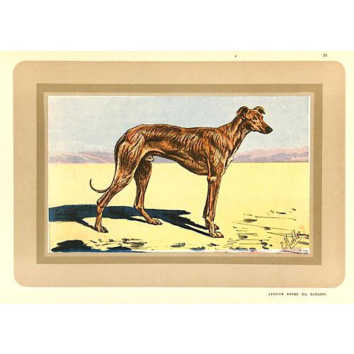 Greyhound, 1931