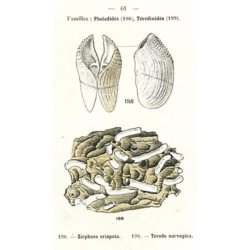 Shells, 1913