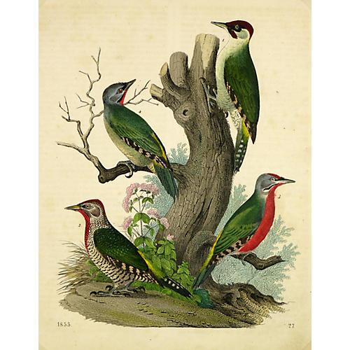 Four Wild Birds, 1853