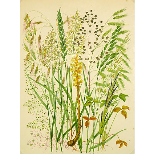 Flowering Stems Print, C. 1890