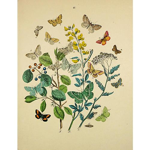 Butterflies, C.1870