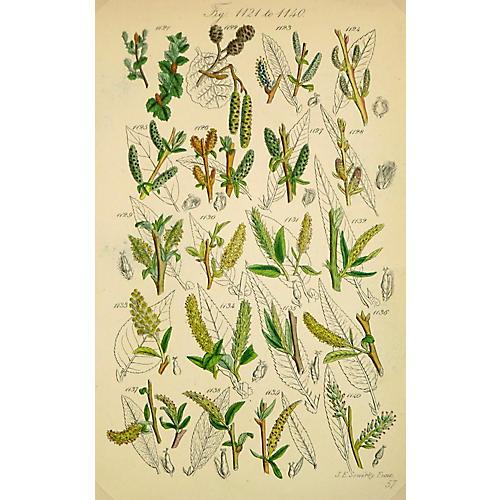 Variety Blossoms Print