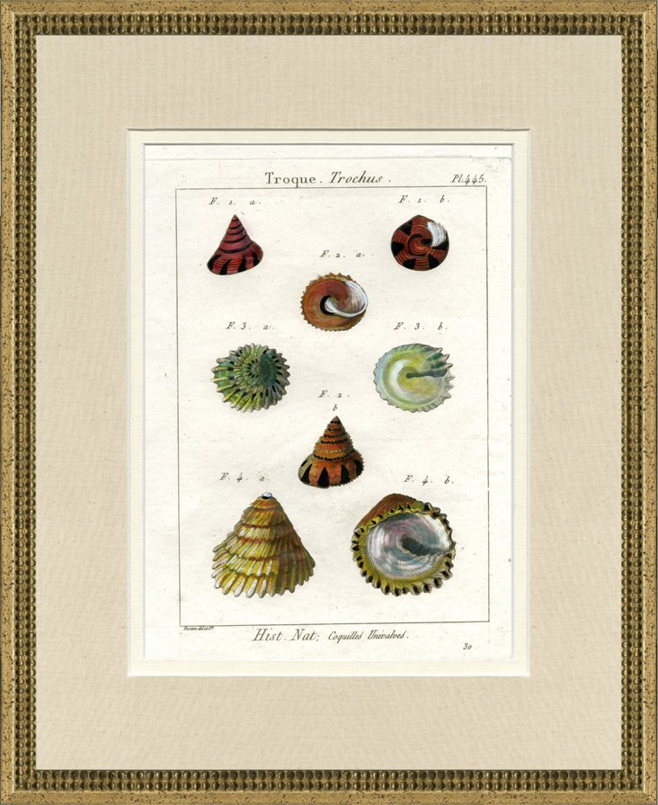 1770s Encyclopedia     Sealife Print