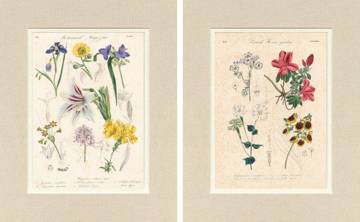 Botanical Prints,     1834, Pair