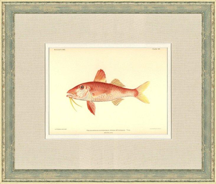 Hawaiian   Fish    Print,   1903