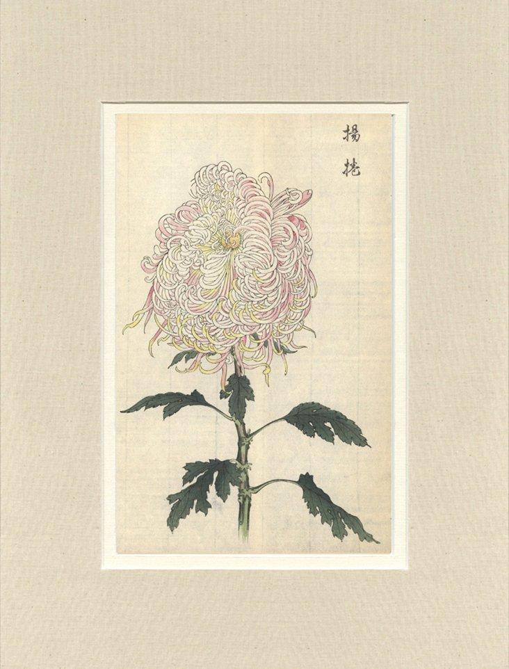 Japanese Flower  Prints
