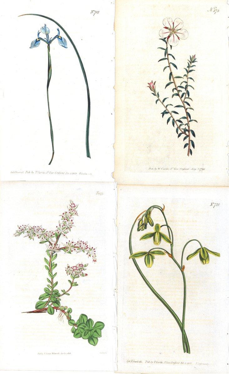 Curtis    Floral Prints, S/4