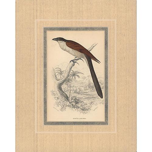 Bird Print II, 1835