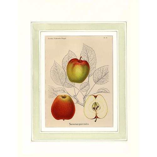 Apple Print, 1912