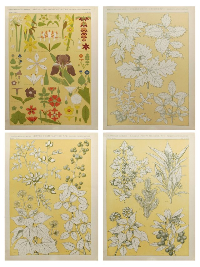 Owen Jones Nature Prints, S/4