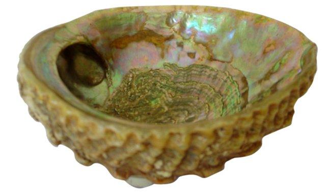 Abalone Shell Dish