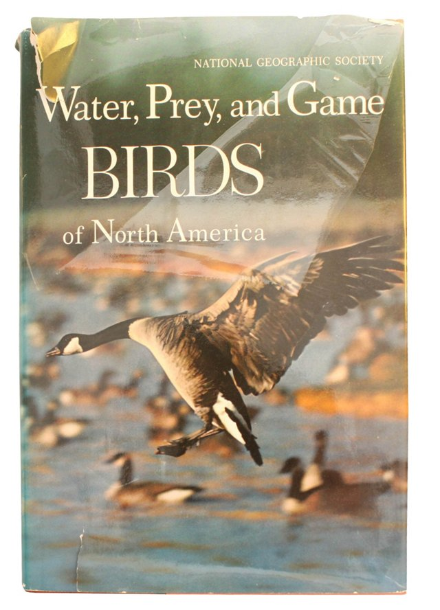 Water, Prey, and Game Birds