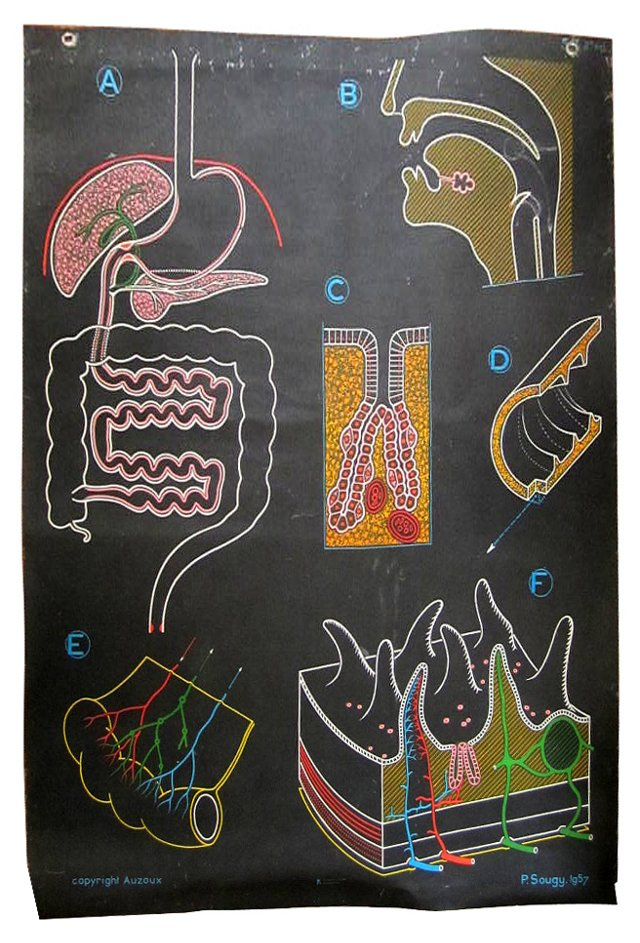 French Digestion Poster