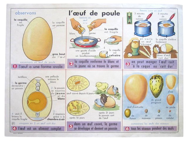 French Egg & Cheese Teaching  Poster