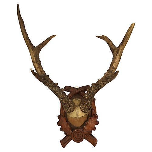Deer Trophy Mount