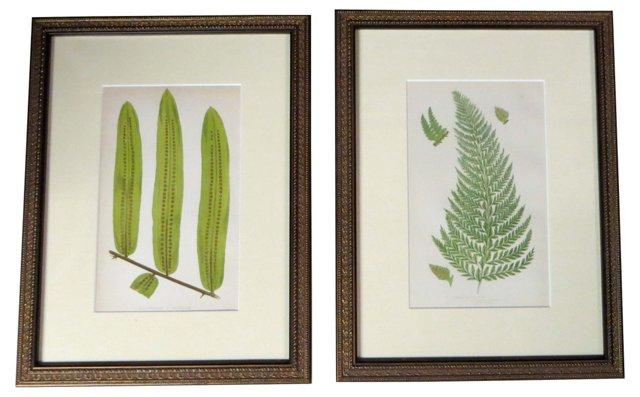 19th-C. Framed Ferns, Pair