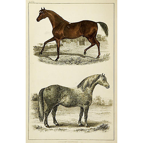 1860s Engraving of Horses