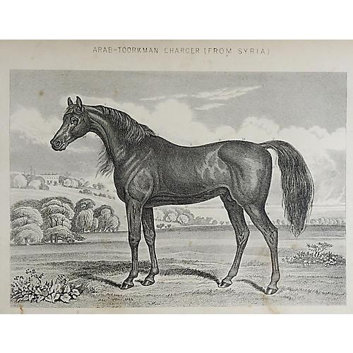 Arabian Horse Engraving, 1894